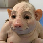 Friday Funny: The Swine Flu – Do you have it?