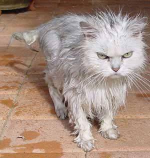 Clean Kitty